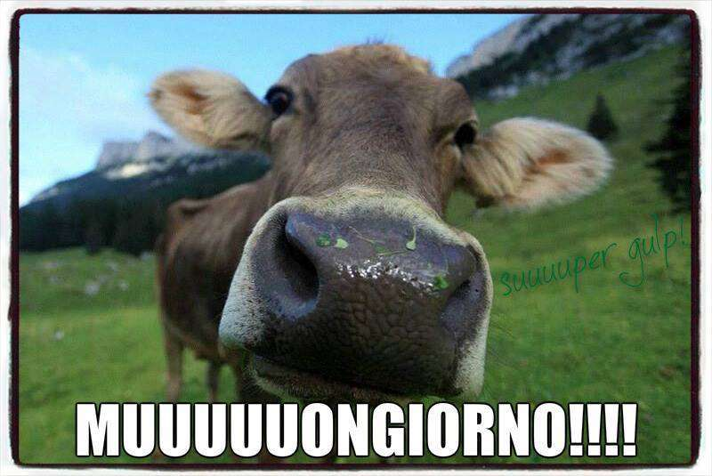 Immagini divertenti buongiorno per whatsapp foto tecnocino for Foto per il buongiorno
