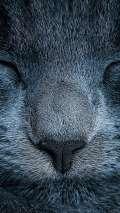 Sfondo blocca schermo di Android con naso di gatto che dorme