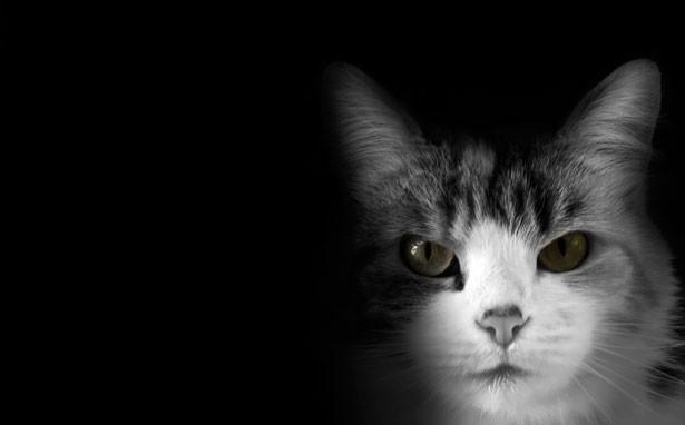 Foto animali gratis 2 45 tecnocino for Foto hd bianco e nero